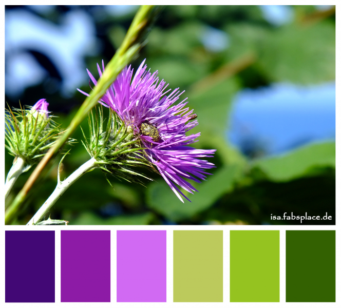 Color palettes purple isa 39 s place Blue and green colour scheme