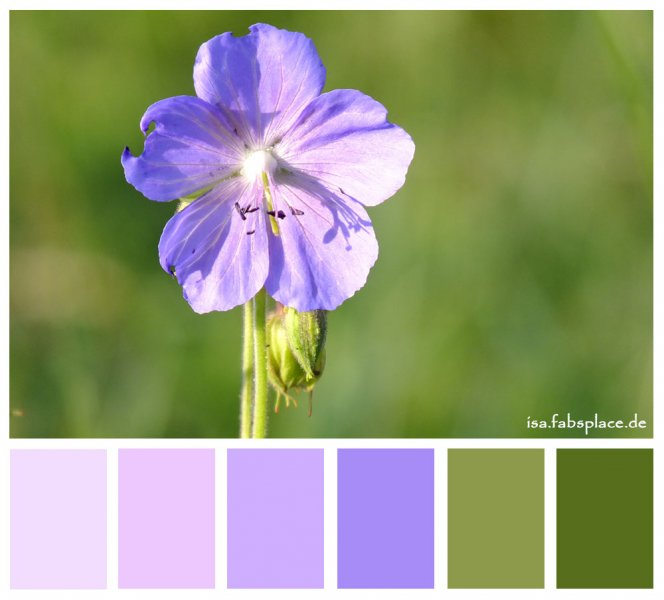 Color Palettes Yellow Purple Strength Flower