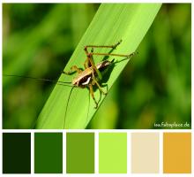 Brave Grasshopper